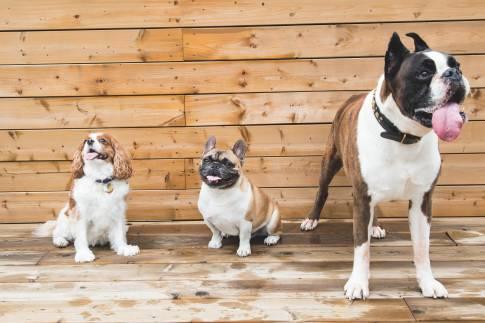 Dog Boarding & Grooming | Kritter Kastle | Green Lake, WI