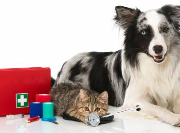 Assembling a Pet First Aid Kit