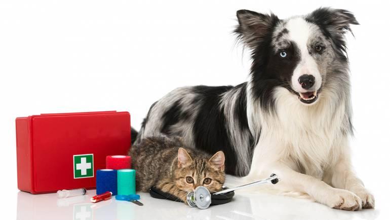 Assembling a Pet First Aid Kit