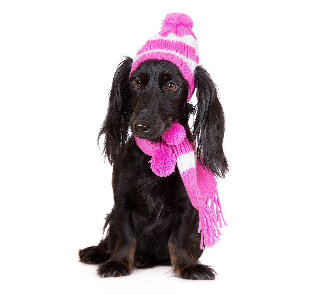 10 Winter Safety Tips for Dog Owners